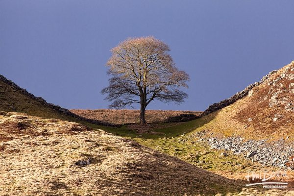 Catching The Light Sycamore Gap