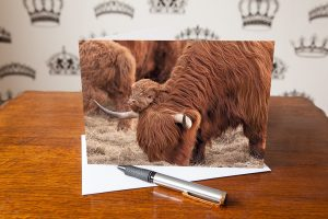 This photograph includes a highland cow with ts calf leaning its little head over it