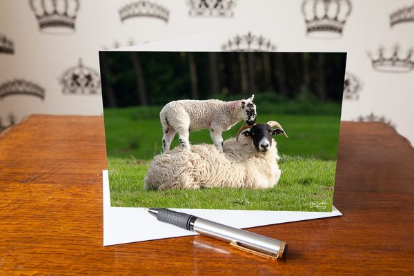 This greetings card features a photo of a cute lamb getting a piggy back from a sheep.
