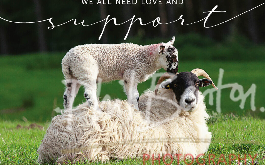 Piggy Back, Sheep & Lamb, We all need Love and Support, Quoted Print