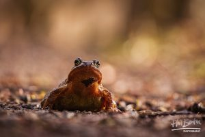 This photo shows a toad with very wide eyes having a good look around