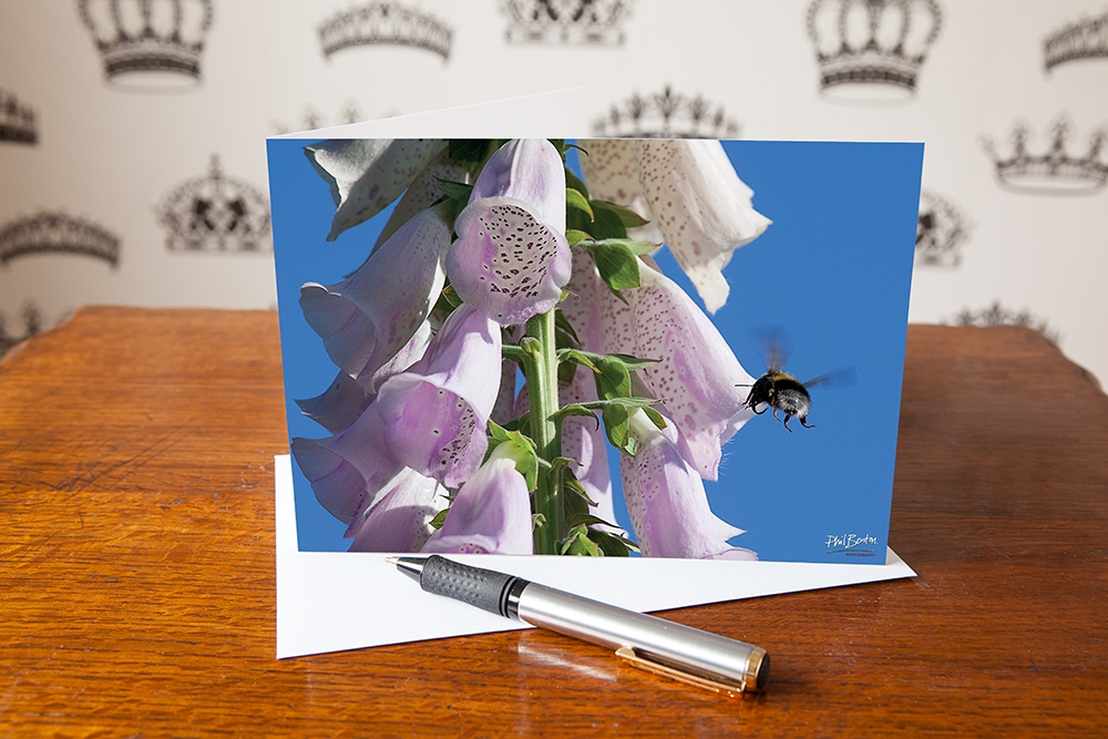 Flight to the Foxglove Greetings Card