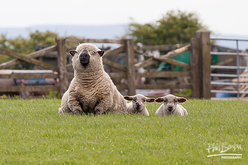 Woolly, Woolly, Woolly!
