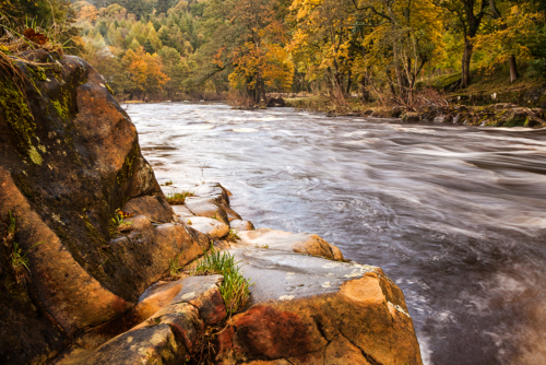 Autumn Flow Rothbury