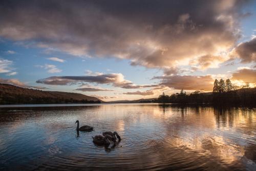 Swan Lake Coniston Water