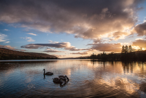 Swan Lake Coniston Water